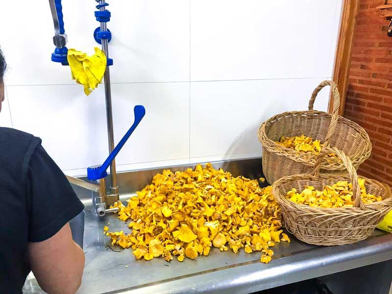 Recoger setas en Soria y cocinarlas